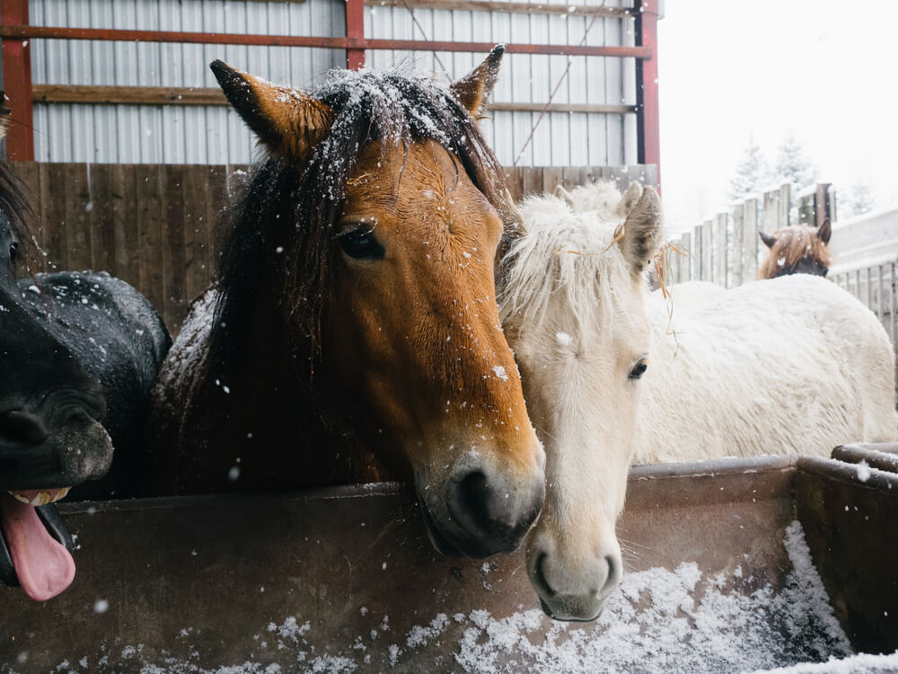 How To Keep Your Horse Warm During Winter
