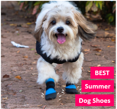 FREE dog shoes - What Are the Advantages of Shoes for Dogs?