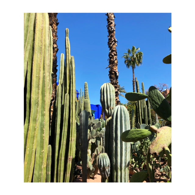 Cacti scenery in Marrakech.