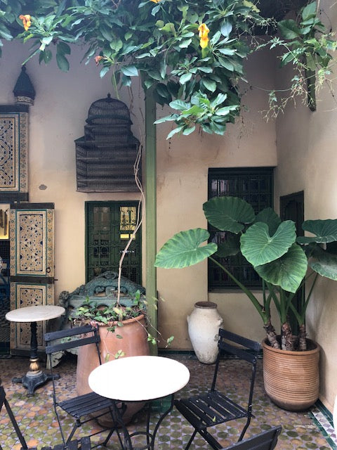 Scene outside in Fez with greenery hanging above and in pots with outdoor seating.