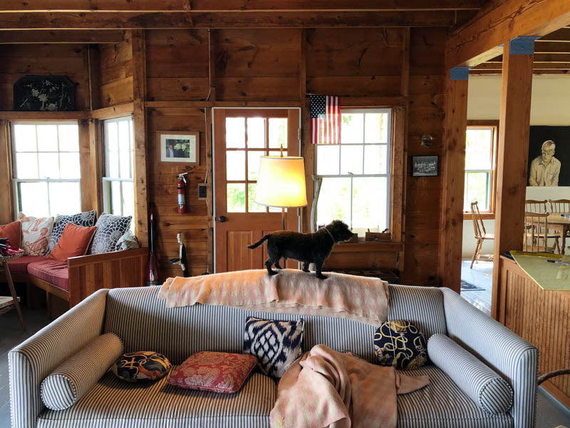 Black dog standing on top of blue and white striped couch in wooden cabin.