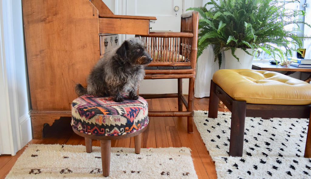 Dog on kilim foot stool