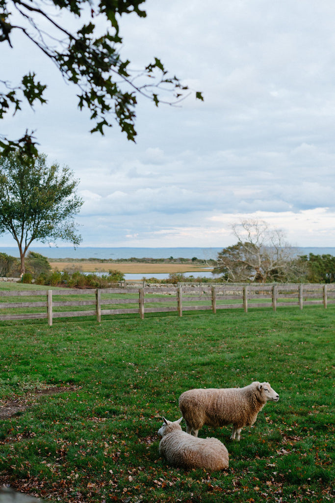 sheep in the landscape surrounding the reception.