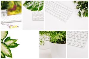 SUCCULENT COLLECTION bundle (60 white background styled stock photos) - Grand & Lovely Stock styled photography desktops lifestyle screens desktops stationary