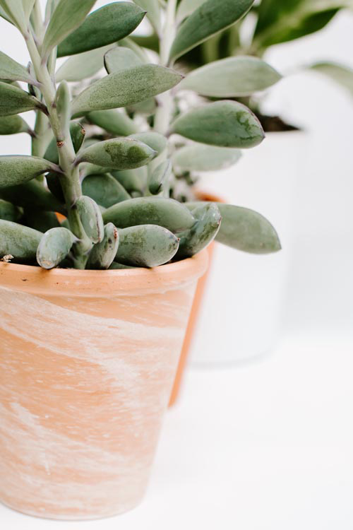 Styled Stock Image I Succulent Plant Terracotta Pot White Background - Grand & Lovely Stock styled photography desktops lifestyle screens desktops stationary