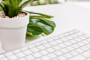 Styled Stock Photography I Minimal White keyboard desk plant - Grand & Lovely Stock styled photography desktops lifestyle screens desktops stationary