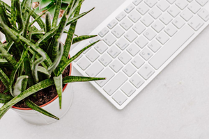 Styled Stock Photo I succulent plant white keyboard background - Grand & Lovely Stock styled photography desktops lifestyle screens desktops stationary