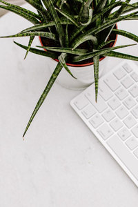 Styled Stock Photo I succulent plant white keyboard portrait - Grand & Lovely Stock styled photography desktops lifestyle screens desktops stationary