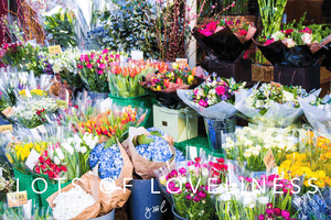 Premium Styled stock photography I Lifestyle Image | Flower shop | Floral | Beauty Concept | Flowers