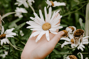 FREE Styled Stock Photo | Hand Holding White Daisy - Grand & Lovely Stock styled photography desktops lifestyle screens desktops stationary