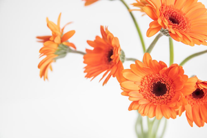 Styled Stock Photography I Autumn / Fall Collection - Orange Gerbera Flowers - Grand & Lovely Stock styled photography desktops lifestyle screens desktops stationary