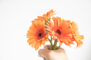 orange flowers, bunch of flowers, orange gerbera's, free styled, styled photography, free styled photography, free styled photos, styled photos, styled stock, styled stock photography, style stock photos, styled stock photos, style stock, free styled stock photos, stock photography, free stock photos, free stock photo, stylish stock images, free subscriber images, stock photo bundles, background images