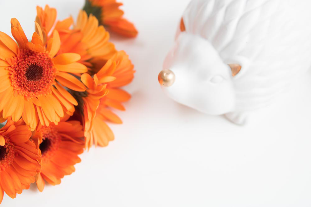 FREE Styled Stock Photo I Autumn/Fall Collection - Orange Gerberas & Hedgehog - Grand & Lovely Stock styled photography desktops lifestyle screens desktops stationary