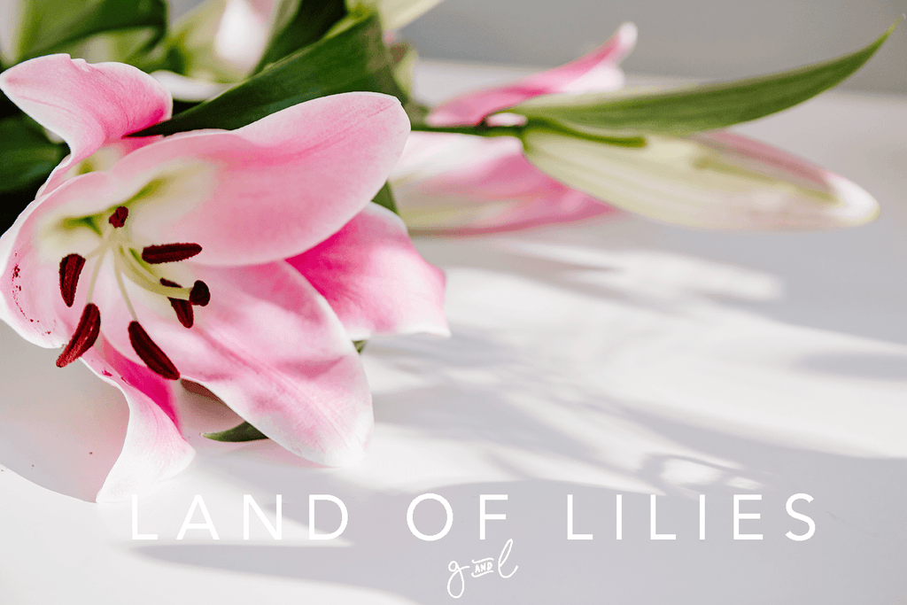 Premium Styled stock photo I Floral Image | White Lily | Shadows | White background | feminine blog - Grand & Lovely Stock styled photography desktops lifestyle screens desktops stationary