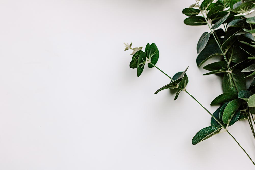 #Blogging I Eucalyptus stock photo | white background I floral | Single Photo - Grand & Lovely Stock styled photography desktops lifestyle screens desktops stationary