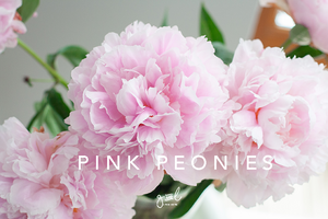 stunning pink peonies, beautiful pink flowers, free styled stock photos