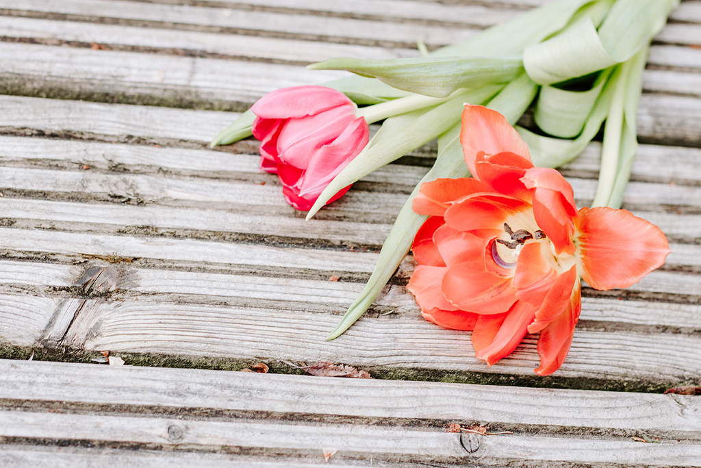 FREE Styled Stock Photo |Tulips Spring Flowers - Grand & Lovely Stock styled photography desktops lifestyle screens desktops stationary