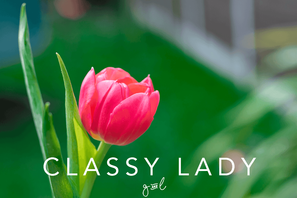 Premium Styled stock photography I Nature Image | Spring Flowers | Single Red Tulip | Tulips | Feminine Blog - Grand & Lovely Stock styled photography desktops lifestyle screens desktops stationary