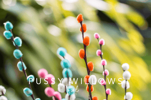 Premium Styled stock photography I Lifestyle Image | Pussy Willows | Floral | Spring colours | Background photo - Grand & Lovely Stock styled photography desktops lifestyle screens desktops stationary