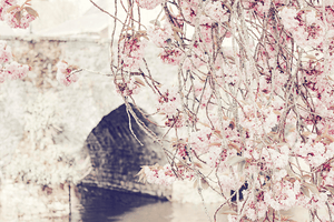 Styled Stock PhotographyI Magnolia cherry blossom tree river stock photo | nature I floral - Grand & Lovely Stock styled photography desktops lifestyle screens desktops stationary