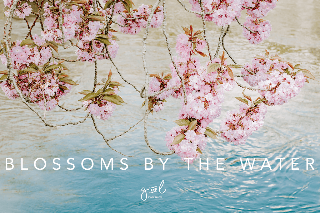 Premium Styled stock photo I Floral Image | Pink Cherry Blossoms | Water | Lifestyle Blog