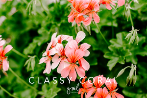 Premium Styled stock photography I Lifestyle Image | Orange Flowers | Floral | Coral Flower | Orange - Grand & Lovely Stock styled photography desktops lifestyle screens desktops stationary