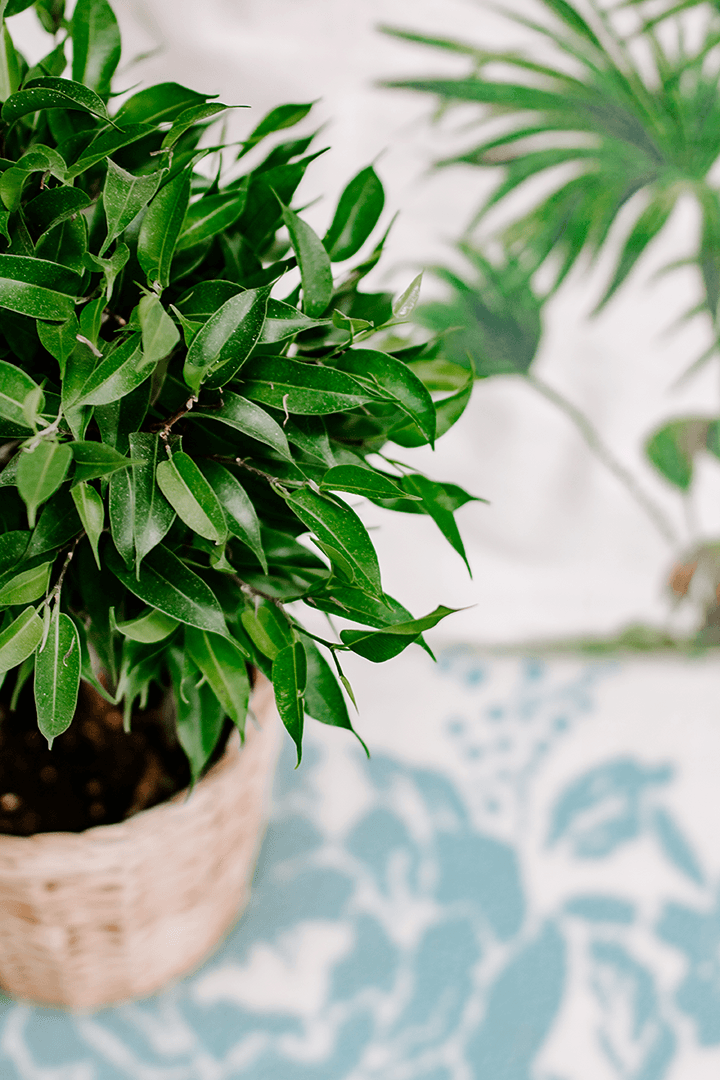 Free Styled Stock Photo | Lifestyle small green bush plant home portrait - Grand & Lovely Stock styled photography desktops lifestyle screens desktops stationary