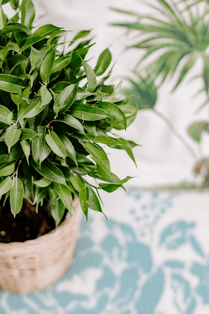 Lifestyle | Styled stock photo | small green bush plant home portrait | Single Photo - Grand & Lovely Stock styled photography desktops lifestyle screens desktops stationary