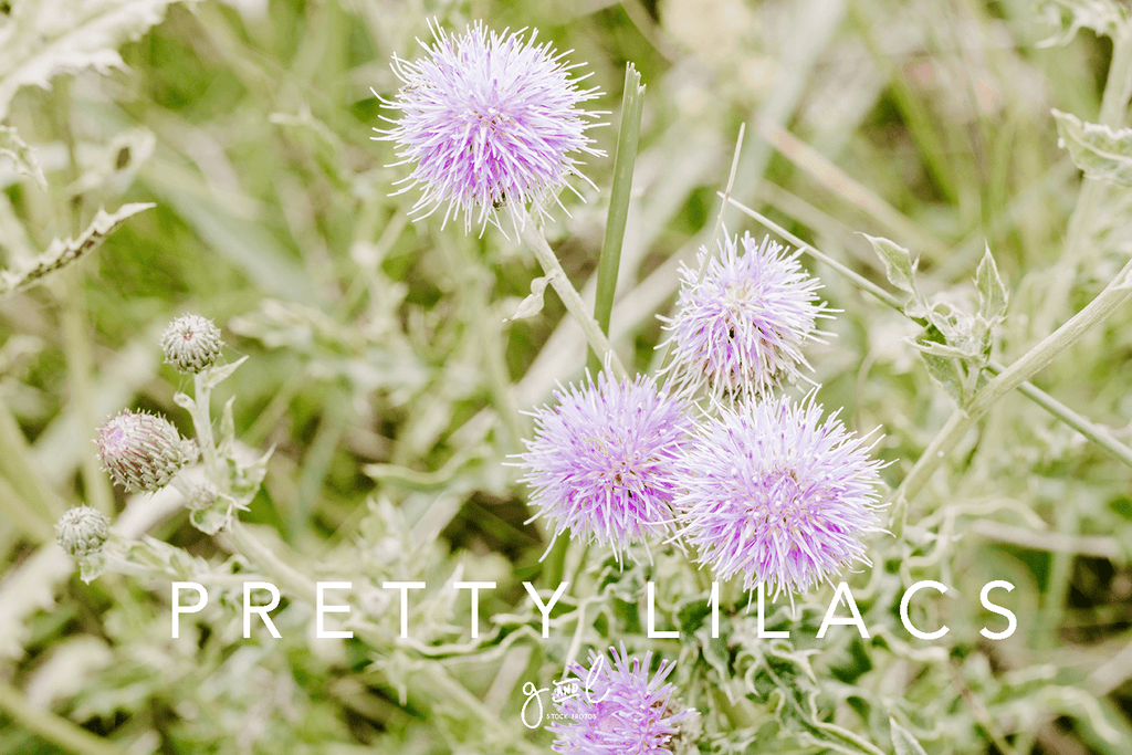 Premium Styled stock photos I Nature Stock Photo | Pretty Lilac Flower | Beach Flowers | Blog stock images - Grand & Lovely Stock styled photography desktops lifestyle screens desktops stationary