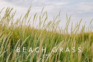 Premium Styled stock photo I Nature Image | Beach | Long Grass | Dunes | Living Blog - Grand & Lovely Stock styled photography desktops lifestyle screens desktops stationary