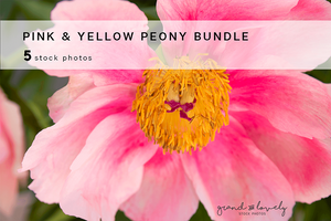 PINK & YELLOW PEONY FLORAL bundle (5 styled stock photos) - Grand & Lovely Stock styled photography desktops lifestyle screens desktops stationary