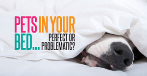 Pets in the Bed: Perfect or Problematic?