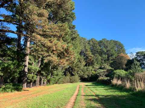 Merricks - Red Hill Rail Trail