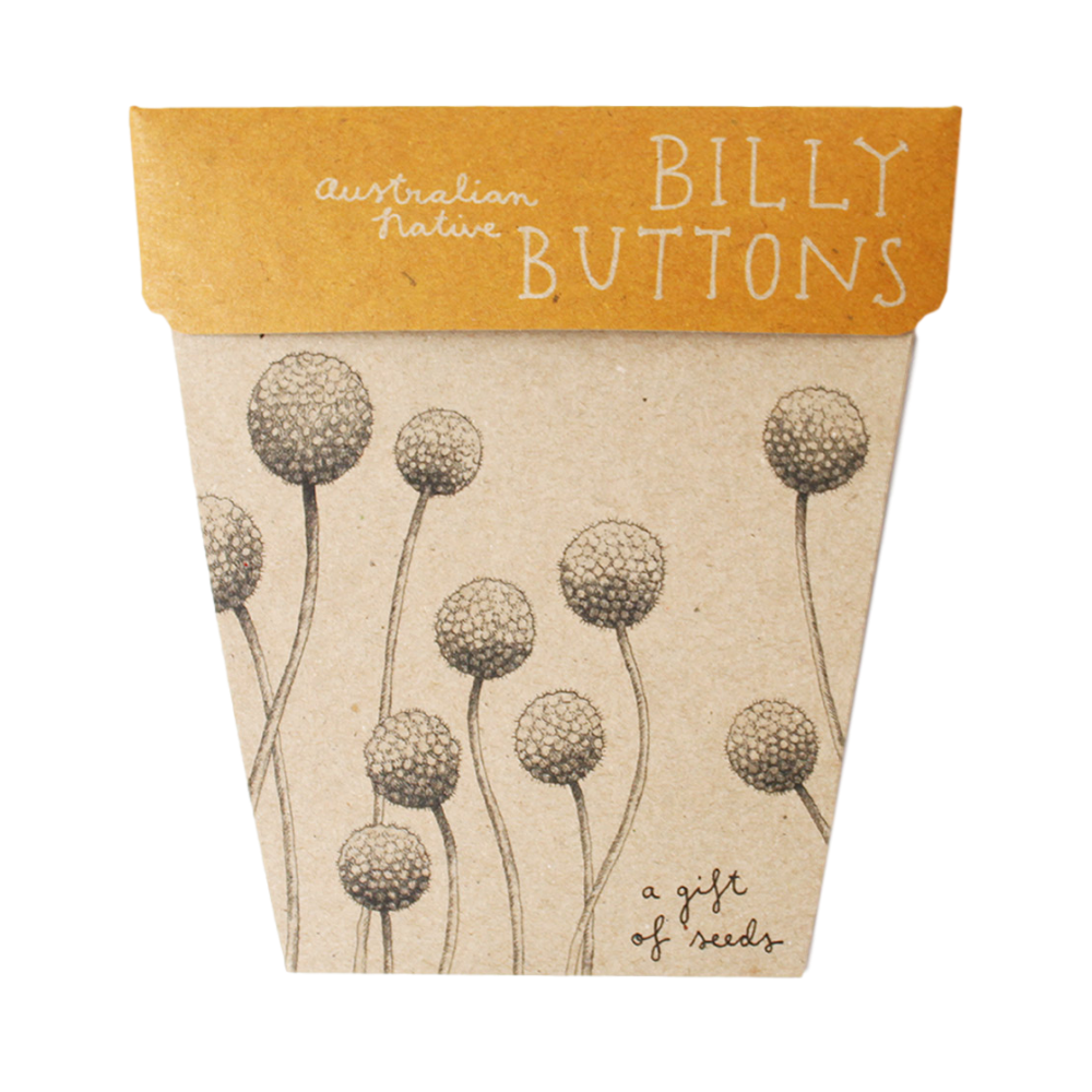 Gift Seeds -Billy Buttons