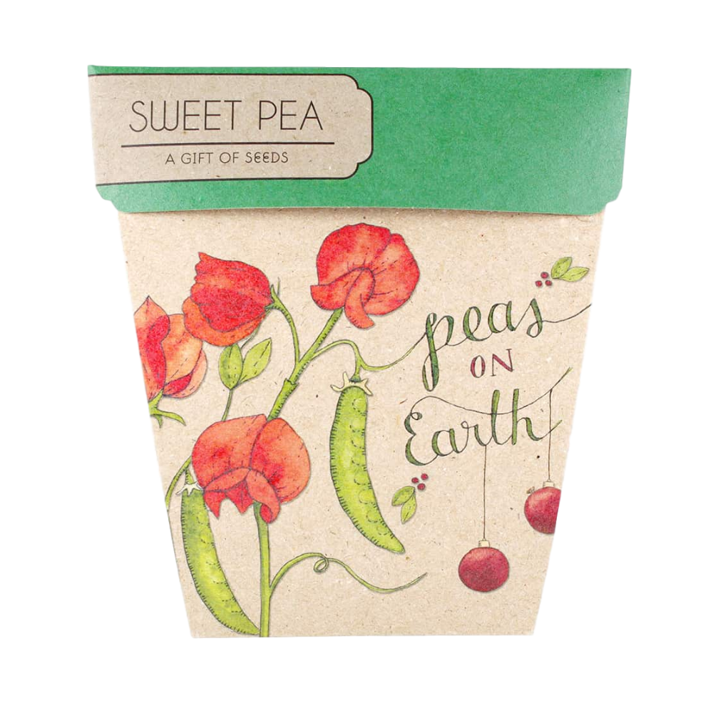 Gift Seeds - Christmas Sweet Pea (Peas on Earth)