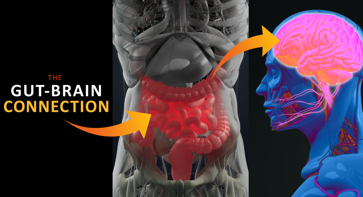 The Gut - BRAIN CONNECTION!