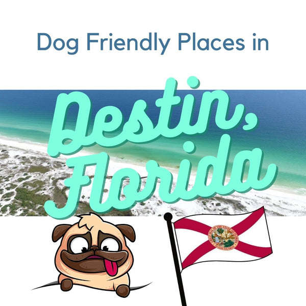Dog friendly places in Destin, Florida