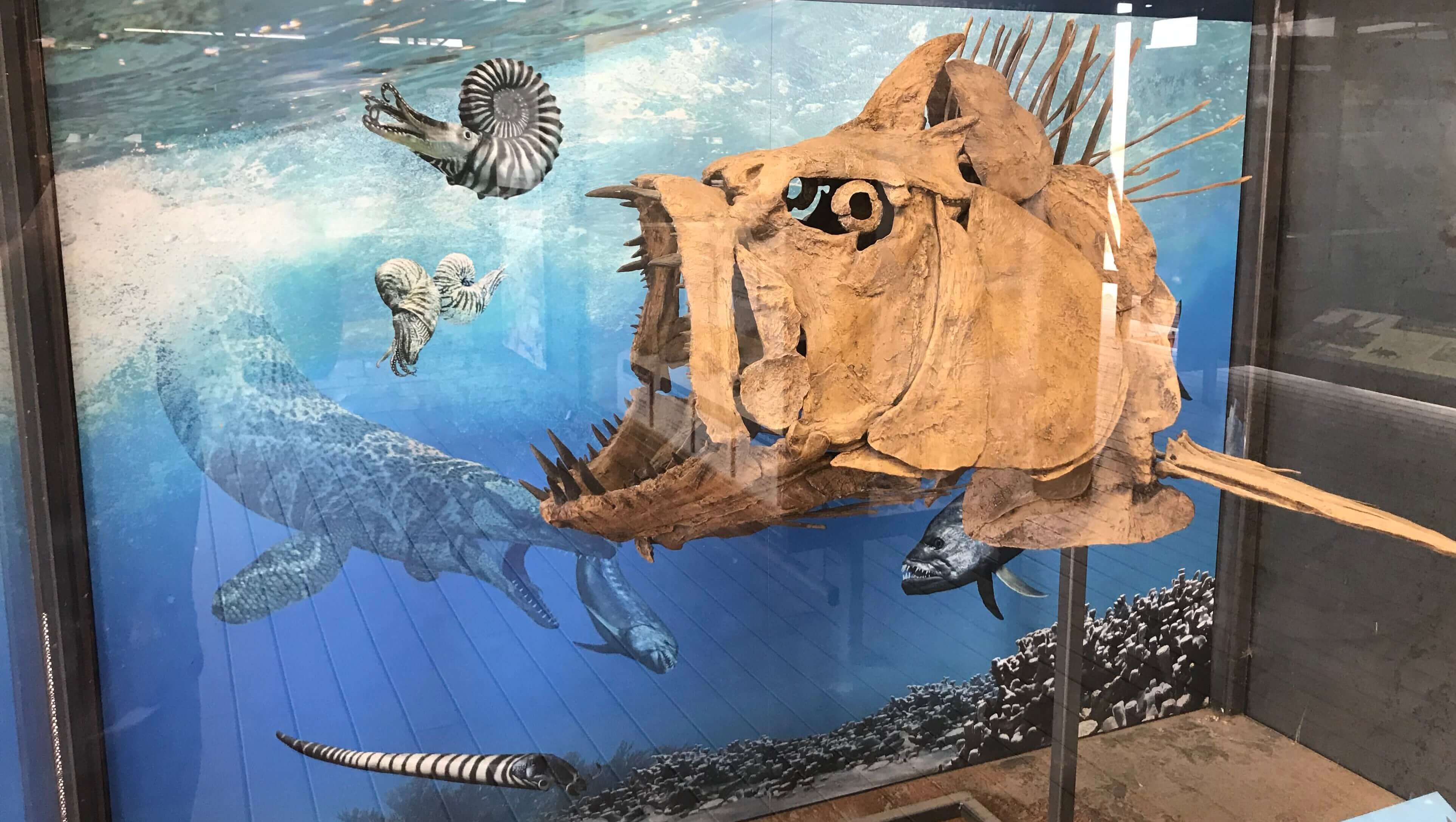 Fossil Discovery Exhibit - Cretaceous Era Fossil