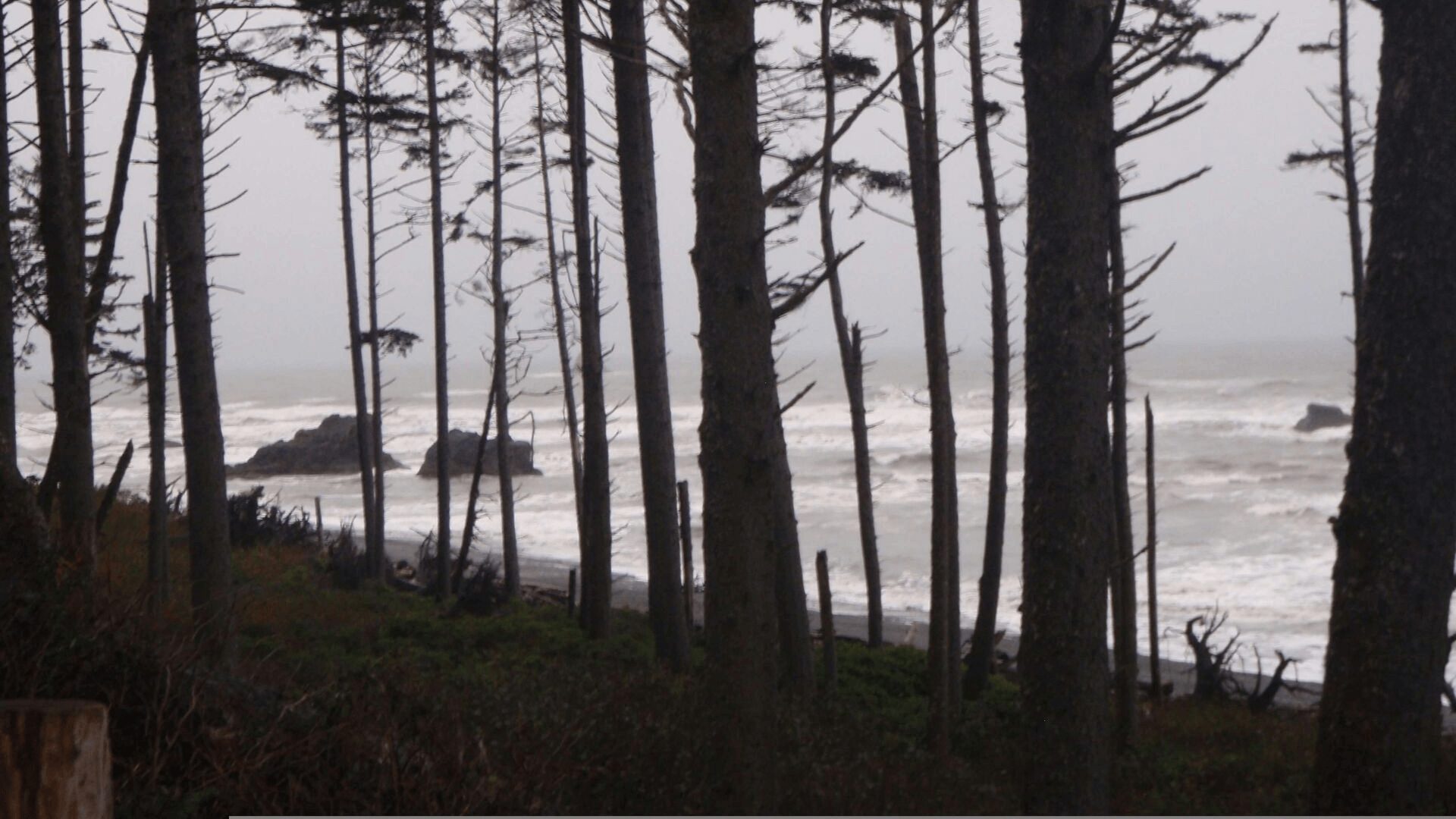 Ruby Beach through trees