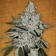 Load image into Gallery viewer, Girl Scout Cookies Auto - Fast Buds