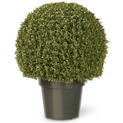 National Tree 22 Inch Mini Boxwood Ball Plant In Green Pot (Lbxm4-700-22)