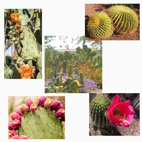 Collage of cacti featured in a blog post by Jackie Vujcich of Colorado Creations Quilting