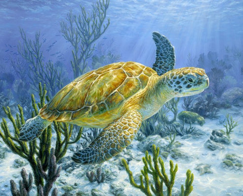 Quilting fabric panel featuring a sea turtle swimming under the water available at Colorado Creations Quilting