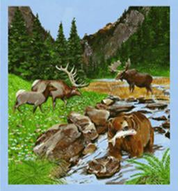 A moose, elk and bear gather at the stream that flows through the meadow. This