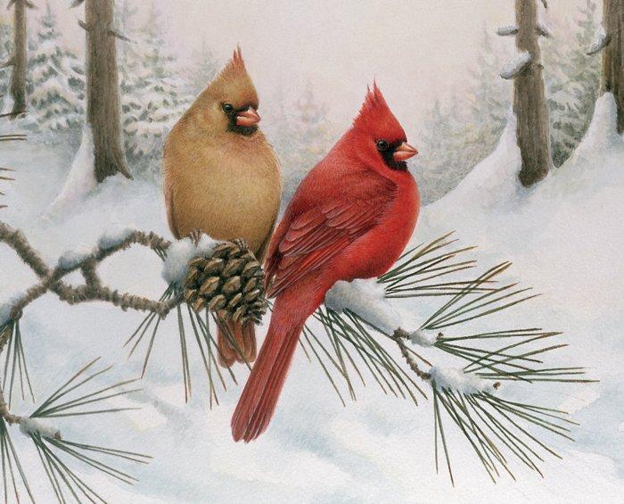This luscious panel features a pair of wonderful cardinals in rich reds and golden-browns. They're perched on a snow-laden branch among pinecones and needles. A snowy forest in the distance rounds out the composition.