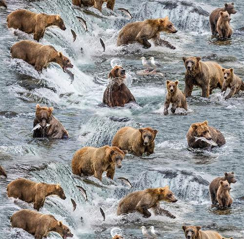Brown bears fishing in fast moving water catching salmon cotton fabric by Elizabeth's Studio and available at Colorado Creations Quilting
