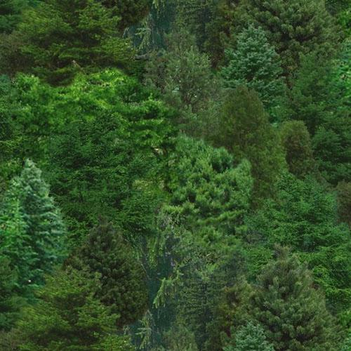 Packed evergreen trees