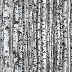 Packed gray birch or aspen tree trunks