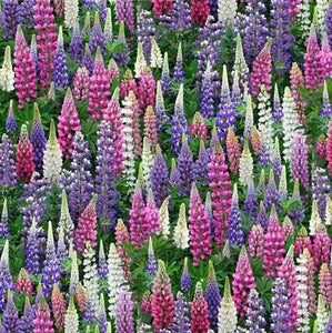 Multicolored Lupine Wildflowers fabric by Elizabeth's Studio available at Colorado Creations Quilting