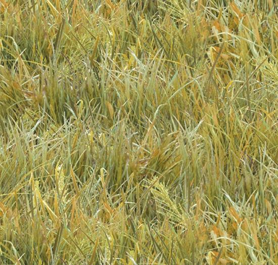 light green prairie grass cotton fabric available at Colorado Creations Quilting